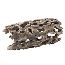 Exo Terra® Cholla Cactus Skeleton
