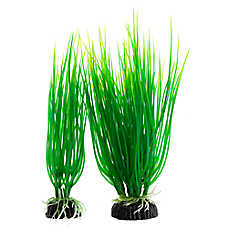 Top Fin® Green Spikey Grass Aquarium Plant Variety Pack