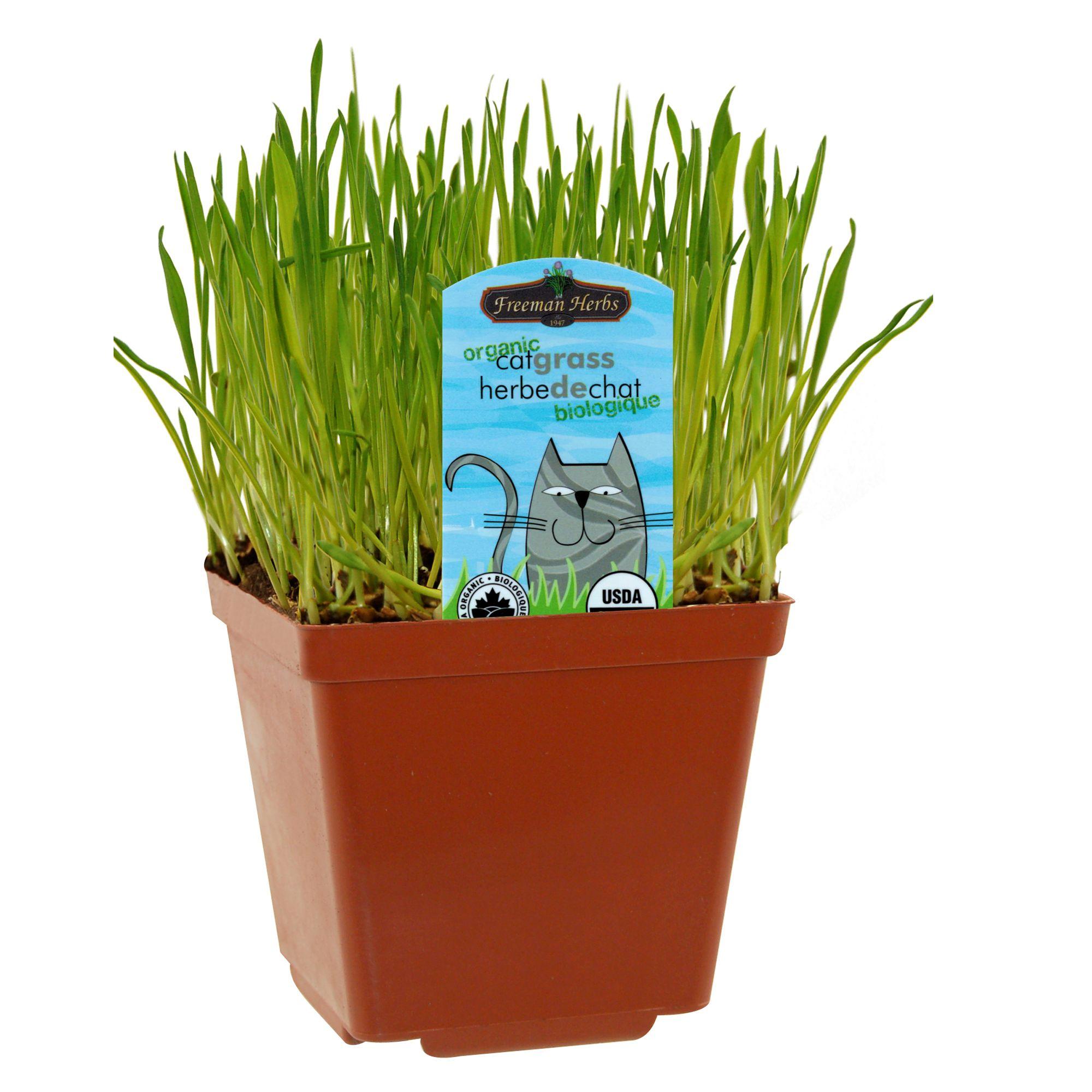 Catnip & Grass