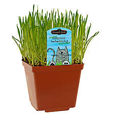 Freeman Herbs Living Cat Grass - Organic