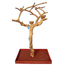 A&E Cage Company Java Wood Tree Floor Playstand