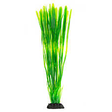 Top Fin® Green Seaweed Plant