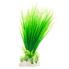 Top Fin® Green Spikey Plant