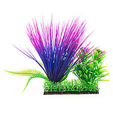 Top Fin® Purple, Blue and Green Landscape Plant