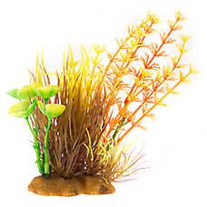 Top Fin® Mini Orange Base Aquairum Plant