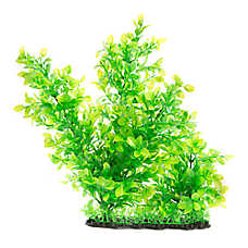 Top Fin® Massive Landscape Bush