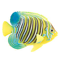 Top Fin® Regal Angelfish Aquarium Ornament