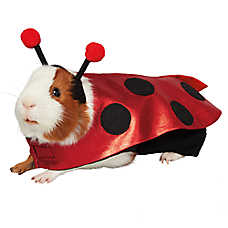 Thrills & Chills Pet Halloween™ Lady Bug Costume