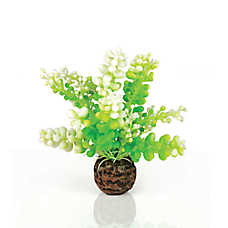 biOrb® Green Caulerpa Artificial Aquarium Plant