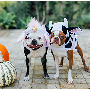 4: Throw a pet-friendly costume party
