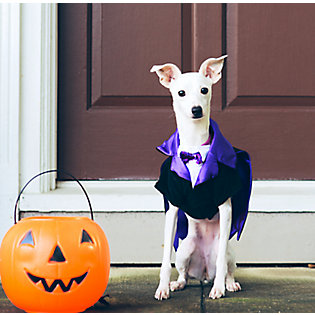 1: Make your pet a trick-or-treat greeter