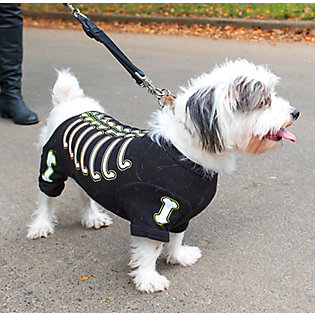 3: Plan or participate in a Halloween pet parade