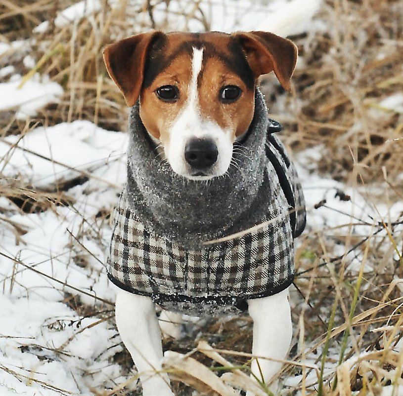 Protect your pet from the extreme cold | PetSmart®