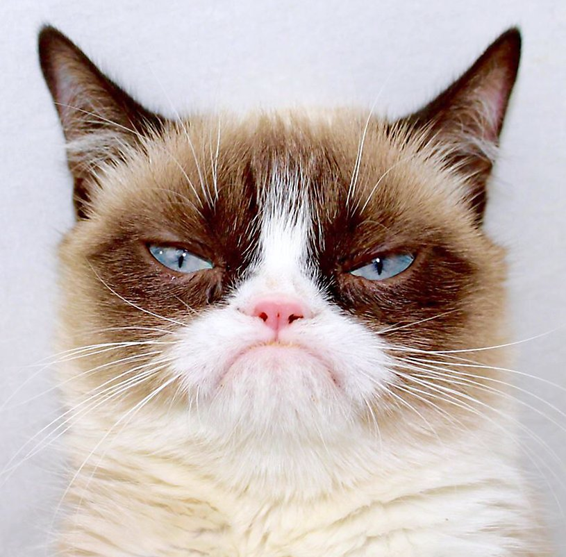 Grumpy Cat Tells All