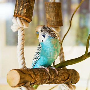 How Do I Set Up a Dove Enclosure?
