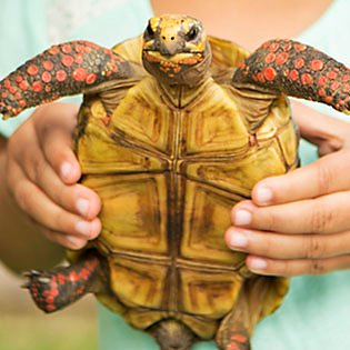 Keeping your turtle or tortoise healthy