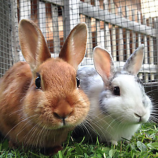 A brown rabbit and a white rabbit outdoors
