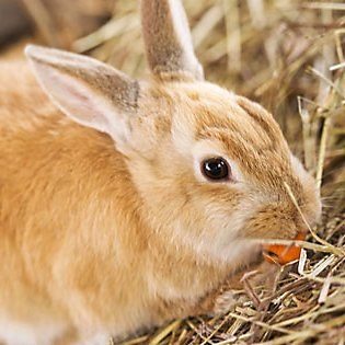 What you'll need for your rabbit's home