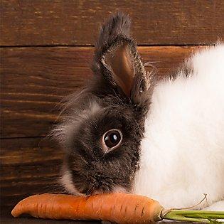 Rabbit Supplies Amp Accessories Checklist Petsmart