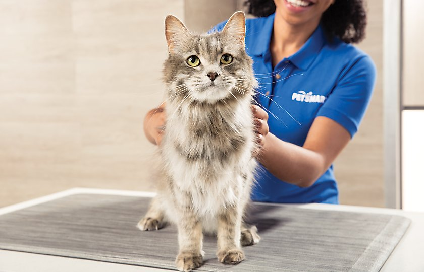 Experience expert care with our expert,<br>academy-trained cat stylists.