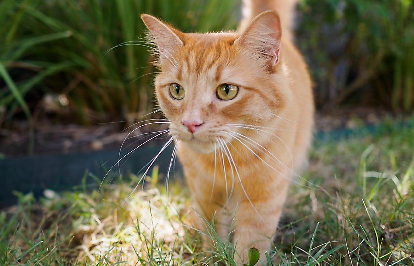 Understanding Natural Nutrition for Cats