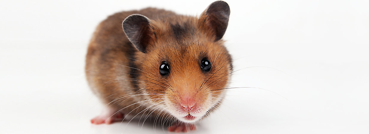 Hamster Supplies & Habitat Accessories | PetSmart