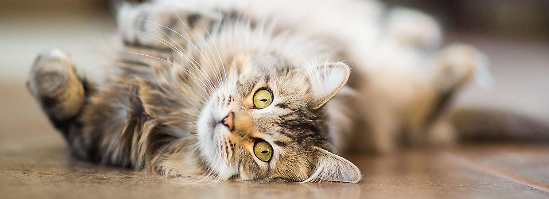 Cat Brushing and Nail Clipping | PetSmart