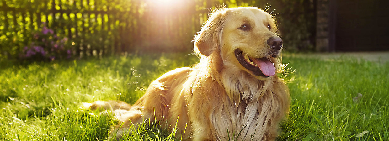 Choosing the best dog food petsmart food center for How much fish oil should i give my dog