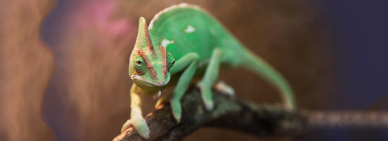 reptile food nutrition amp feeding guide petsmart