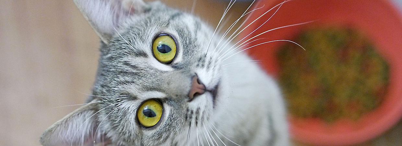Evolve Cat Food Petsmart