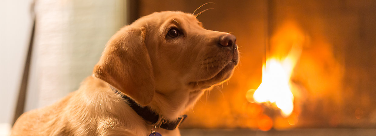 Fire safety tips for pets petsmart for Pet stores near me that sell fish