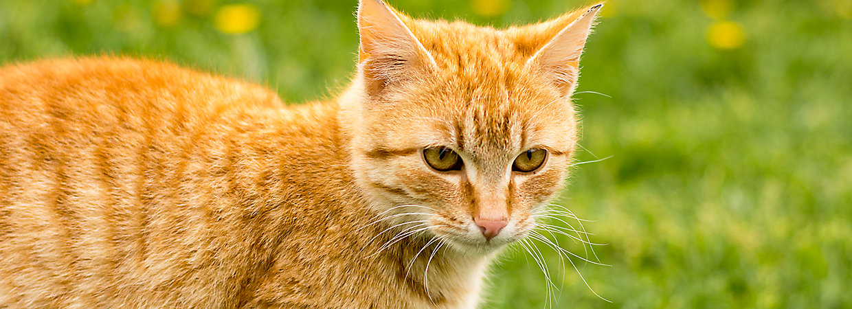how to get cats to eat cat grass
