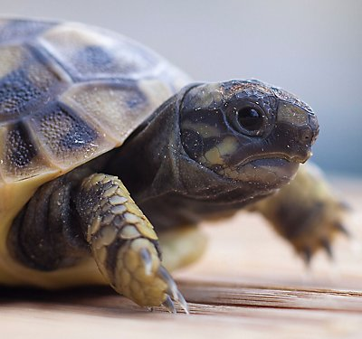 A Set-up Guide for new Tortoise Parents