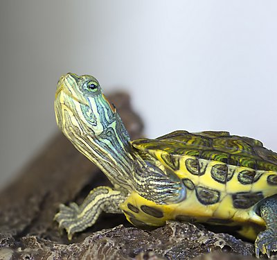A Set-up Guide for New Turtle Parents