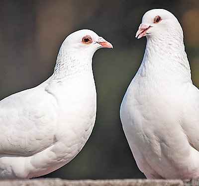 A Set-up Guide for New Dove Pet Parents