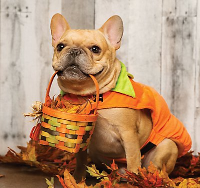 Pet Costumes: A Trend of Cuteness