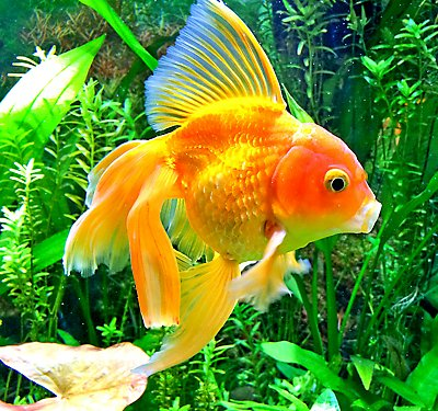 Aquarium water care for healthy fish tanks petsmart for Small fish pictures