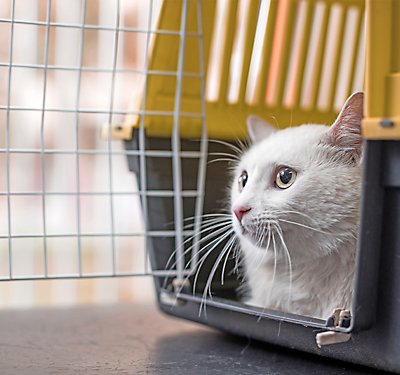 What Kind of Cat Carrier Should I Buy?