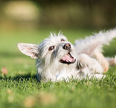 How Do I Protect My Dog From Fleas?