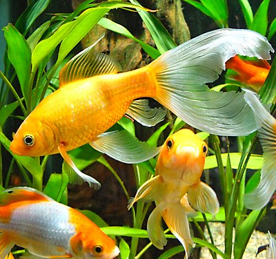 Healthy Aquarium Water