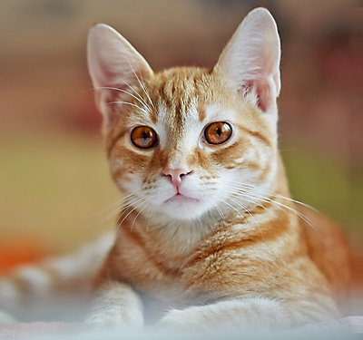 Cat Food Types: What is a Novel Protein?