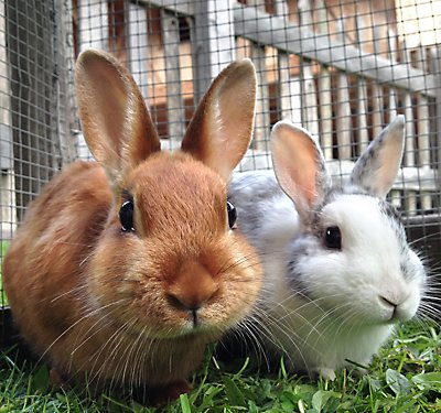 What You'll Need for Your New Pet Rabbit