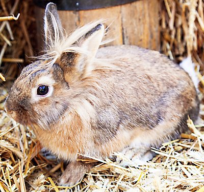 What to Feed My Pet Rabbit