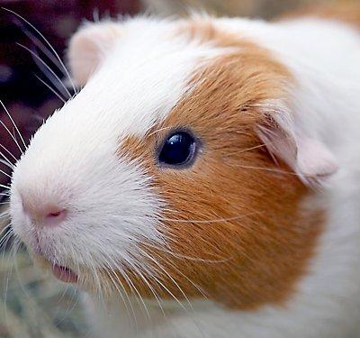 Small Pet Care Guides Petsmart