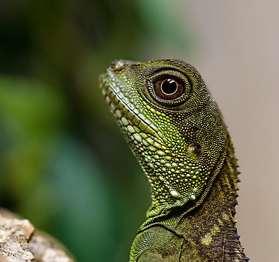 The Cool factor: 7 Reptiles to Chill with