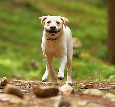 Ticked Off: Preventing and Removing Ticks on Your Dog