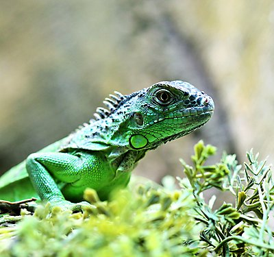 What Climate Does My Reptile Need?