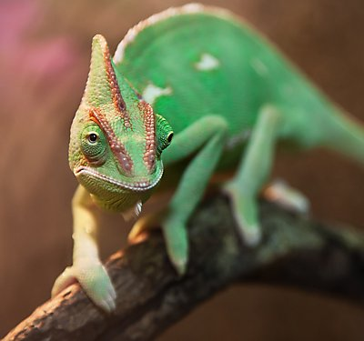 What to Feed Your Pet Lizard or Turtle