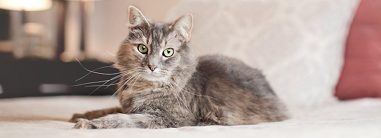 Furminator 174 For Cats Brushes Amp More Petsmart