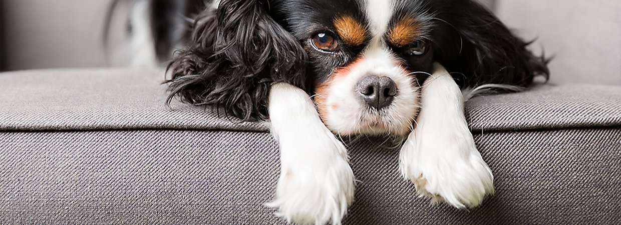 Will Natures Miracle Work For Dog Vomit